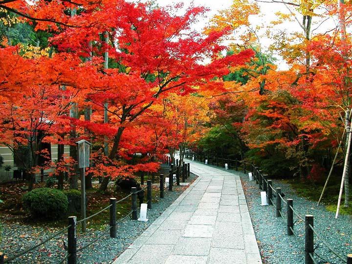 Lá đỏ ở Tokyo Nhật Bản