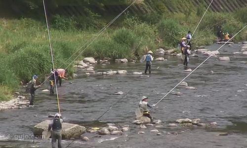 Kết quả hình ảnh cho fish ayu japan