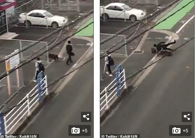 Lợn rừng từng bất ngờ tấn công người đi đường