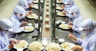 Chế biến thực phẩm - Cơm hộp ở Nhật
